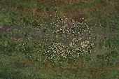 Flock of sheep on pasture, aerial view