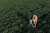 Aerial view of soybean farmer working in field