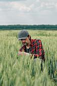 Wheat farmer inspecting crop quality