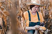 Corn farmer using digital tablet in cornfield