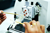 Cutting tissue section with rotary microtome