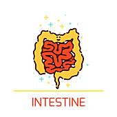 Intestines, illustration
