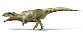 Giganotosaurus dinosaur, illustration