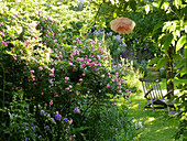 Ramberrose 'Frau Eva Schubert', Liegestuhl im Schatten unterm Baum