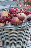 Korb mit frisch gepflückten Äpfeln, Zweig mit Zieräpfeln