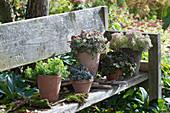Sukkulenten-Arrangement auf Holzbank im Garten