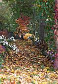 Buntes Herbstlaub auf schattigem Weg zwischen Stauden, Sträuchern und Bäumen