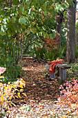 Buntes Herbstlaub auf schattigem Weg zwischen Bäumen, Holzbank mit Fell und Decke als Sitzplatz