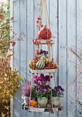 Selbstgebaute Etagere aus Holzscheiben dekoriert mit Hornveilchen Sorbet 'Phantom', Alpenveilchen, Topferika, Kürbissen und Zieräpfeln