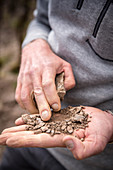A handful of soil, Egon Müller-Scharzhof vineyard, Mosel, Germany