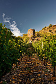A vineyard landscape with a tower, near Hermann Dönnhoff vineyard, Rhineland Palatinate, Germany
