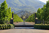 Driveway, Inglenook Winery, Napa Valley, California, USA