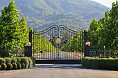 Driveway, Inglenook Winery, Napa Valley, California, USA