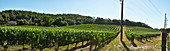 A vineyard landscape, Silverado Trail, Napa Valley, California, USA