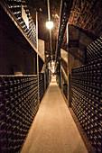 Bottle cellar, Maison Faivelay, Corton, Burgundy, France