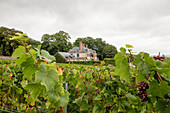 Main building and vines, Taittinger, Champagne, France