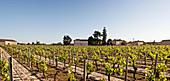 Vineyard landscape, Chateau Le Bon Pasteur, Pomerol, France