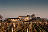 Vineyard landscape, Chateau Eglise Clinet, Pomerol, Bordeaux, France