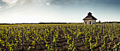 Vineyard landscape with cottage, Chateau Lynch Bages, Pauillac, Bordeaux, France