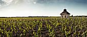 Weinlandschaft mit Häuschen, Chateau Lynch Bages, Pauillac, Bordeaux, Frankreich