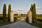 Vineyard landscape, Chateau Faugeres, Saint Emilion, Bordeaux, France