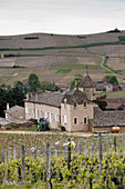A vineyard landscape and Chateau de Pouilly, Pouilly Fuisse, Burgundy, France