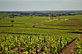 Vineyard landscape, Domaine Leflaive, Burgundy, France