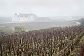 A misty vineyard landscape, Domaine Vogue, Burgundy, France