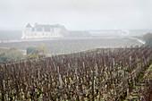 A misty vineyard landscape, Domaine Vogue, Burgundy, France