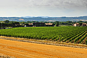 Lungarotti Rubesco, vineyard landscape with vines and buildings, Umbria, Italy