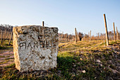 Boundary stone in front of vines, Le Pianelle, Piedmont, Italy