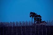 Nächtlicher Sternenhimmel über Le Pianelle, Piemont, Italien