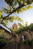 Church tower over Pieve Santa Restituta Gaja, Montalcino, Tuscany, Italy