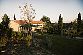 A guest house in a vineyard landscape, Le Pupille vineyard, Maremma, Tuscany, Italy