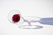 Glass of red liquid