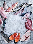 Pieces of different raw fish on crushed ice