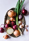 Onion variety