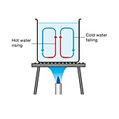 Convection current in heated water, illustration