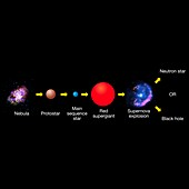 Life cycle of massive star, illustration