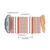 Sound wave propagation, illustration