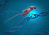 Gene editing of a mosquito, conceptual illustration