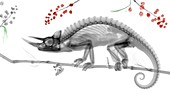Jackson's horned chameleon, X-ray