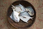 Vier weiße Seebrassen