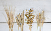 Various crops (rye, barley, wheat, oats) on a wooden background