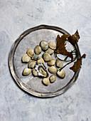 Frische Vongole und Auster