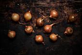 Zwiebeln auf dunklem Holzuntergrund