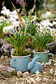 Traubenhyazinthen in emaillierten Bechern, blauer Osterhase, Ostereier und Blütenzweige