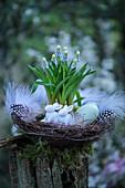 Osternest mit Traubenhyazinthen, Osterhasen, Ostereiern und Federn auf Baumstumpf im Garten