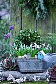 Jardiniere mit Traubenhyazinthen, Ostereiern, Federn und Deko-Vogelhäuschen