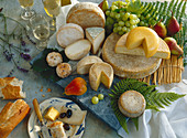 An arrangement of various types of cheese